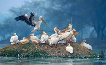 Gujarat Bird Sanctuary Tour
