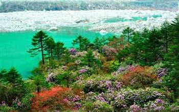 Darjeeling Gangtok Trip Package