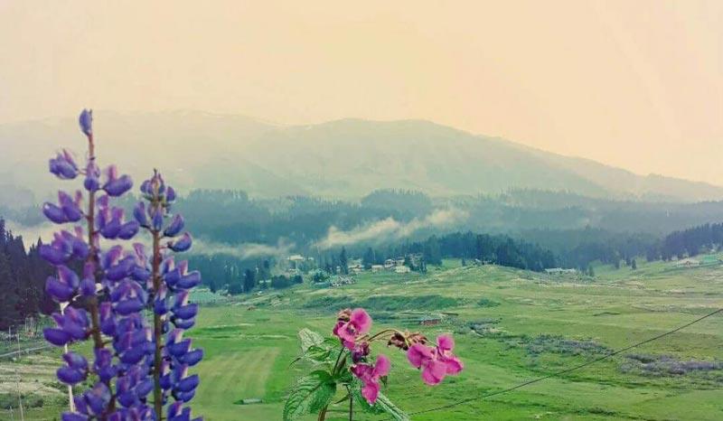 Gulmarg meadows