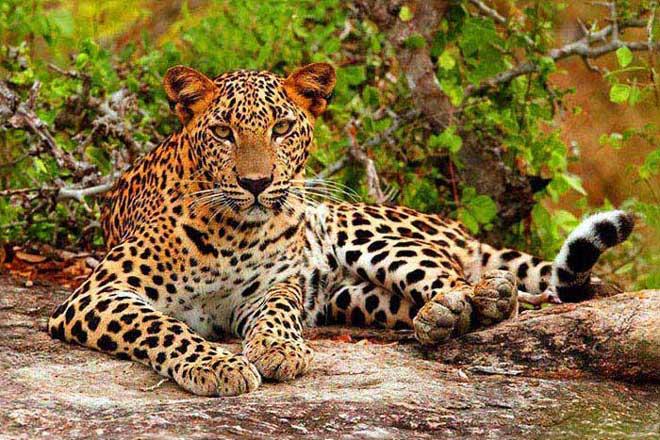 Sri Lanka Wild Life Trip Package