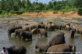 Sri Lanka Short Tour