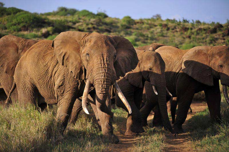 Amboseli & Mount Kilimanjaro View Safari - 3 Days Tour