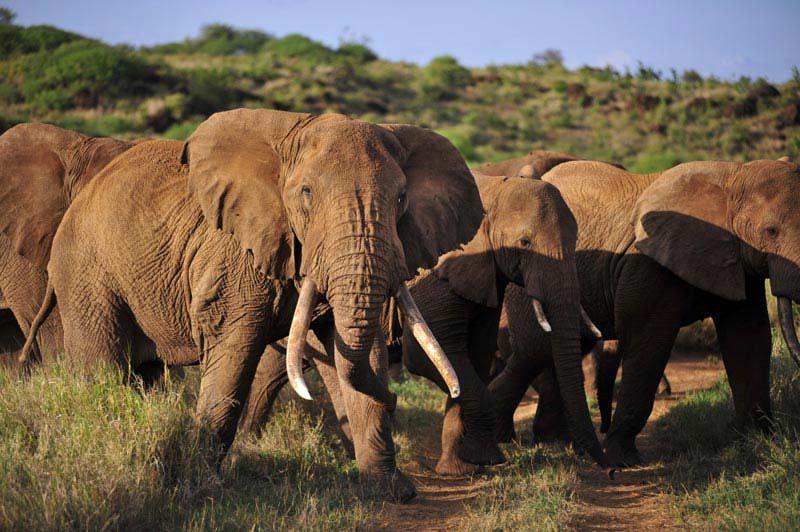 Amboseli & Mount Kilimanjaro View Safari - 3 Days Tour