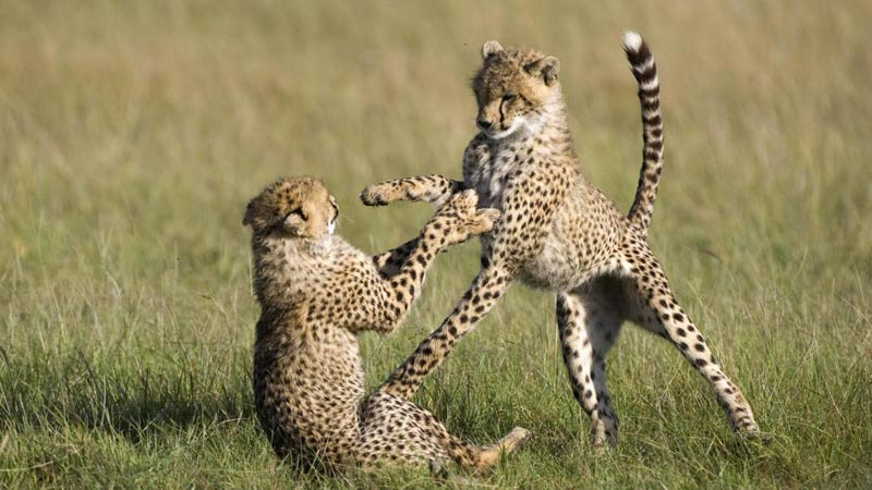 Amboseli National Park - Lake Naivasha & Masai Mara In 6 Days Tour