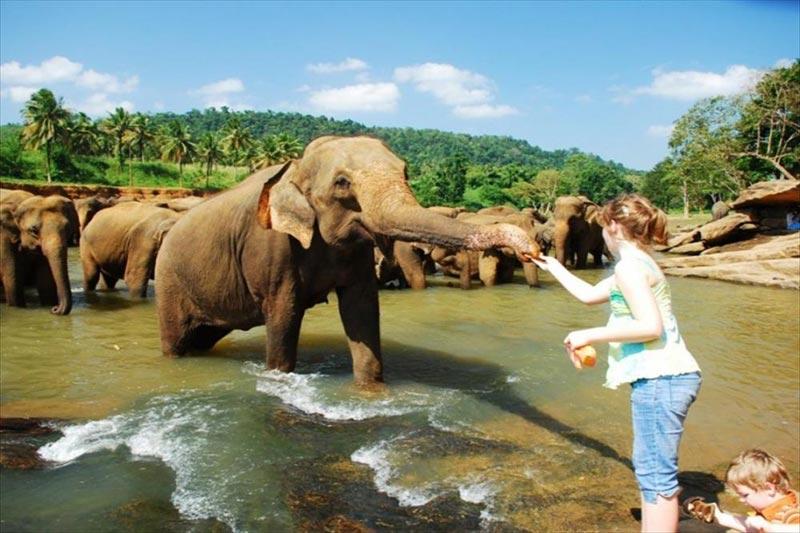 Amazing Sri Lanka Holiday Package 4 Nights / 5 Days