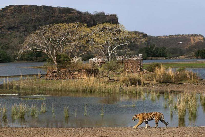Taj and Wildlife Package