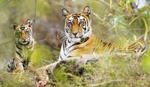 Corbett Tiger Safari Tour Package
