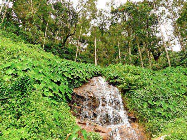 Kodagu Valley Unwind Package