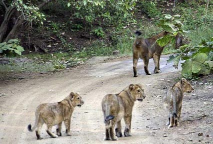 Best of Gujarat with Wildlife Tour