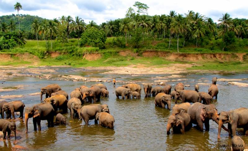 Srilanka Package Nature Special 7 Night 8 Days Tour