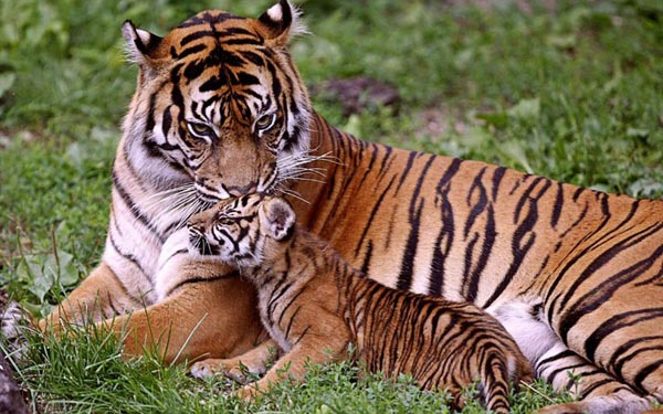 Jim Corbett National Park Tour from Delhi Package