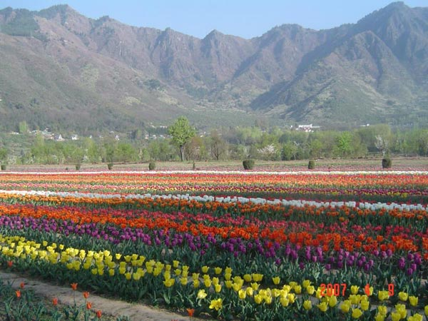 Kashmir Valley Package