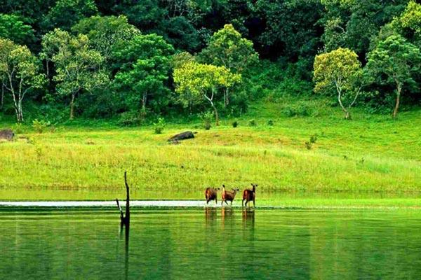 Athirappilly - Cherai Beach - Munnar - Thekkady - Cochin Tour