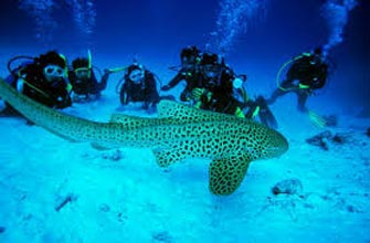 Ultimate Andaman Adventure Tour