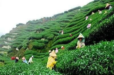 Darjeeling To Sikkim Package Tour