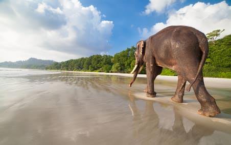 Enjoyable Andaman Tour