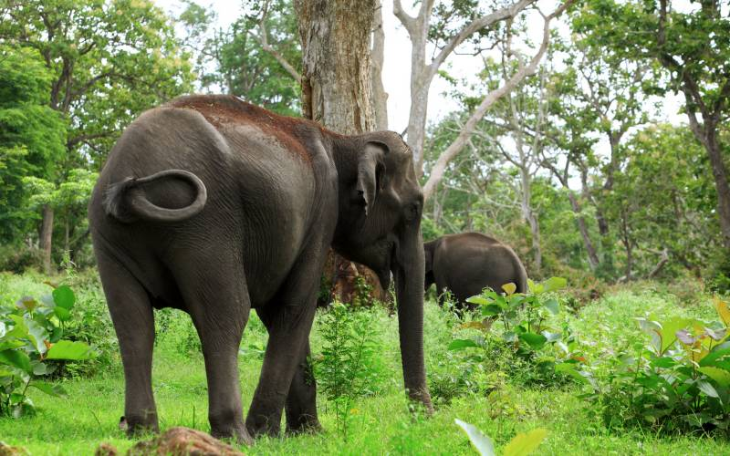 South India Wildlife & Nature Tour