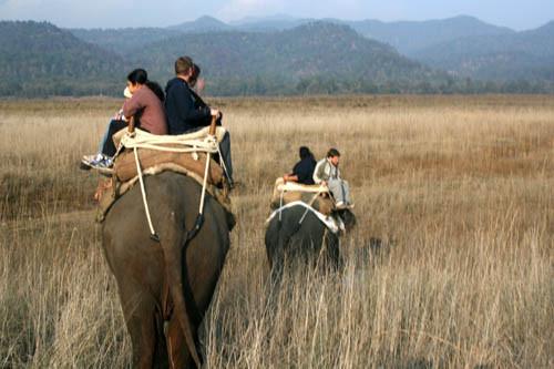 Corbett Tiger Safari (explore the Jim Corbett National Park ) Tour