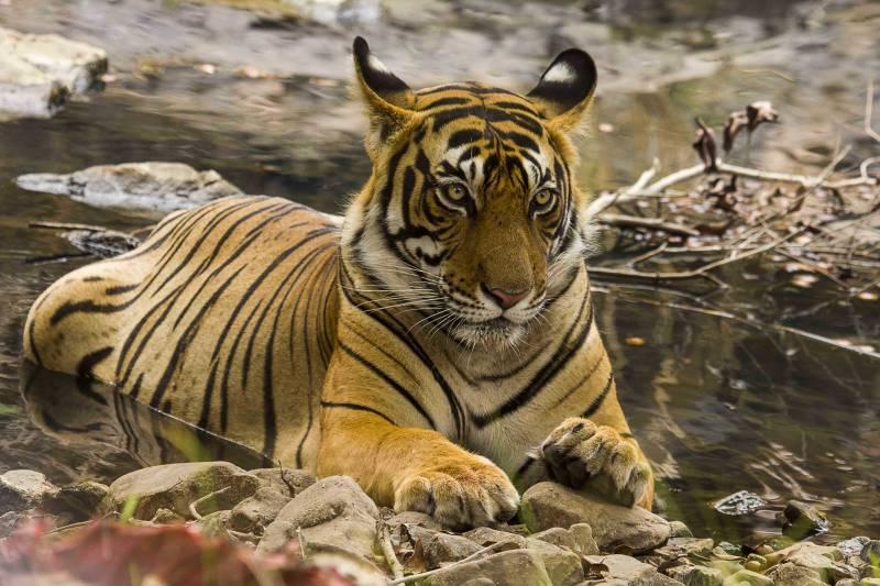 Ranthambore Tiger Safari (explore the Ranthambore National Park) Tour