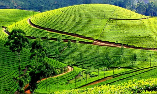 Enjoyable Green Kerala Tour