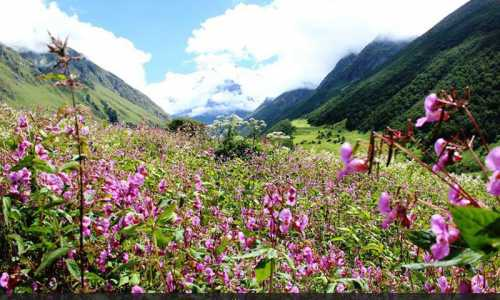Trekking in Valley of Flowers Tour