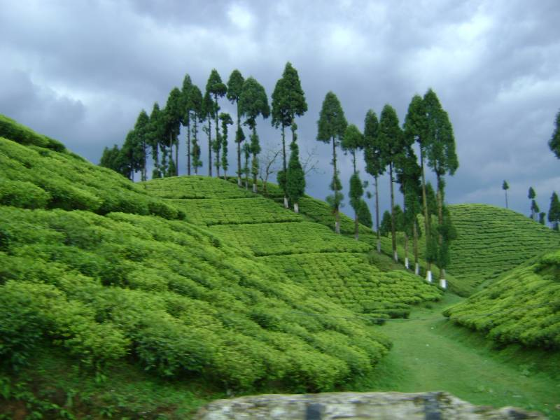 Northeast Marvels Gangkok & Darjeeling Tour