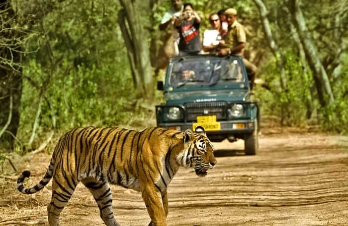 One Night Stay Package for Corbett National Park Tour