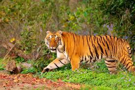 Sundarban Tour Package 2 Days