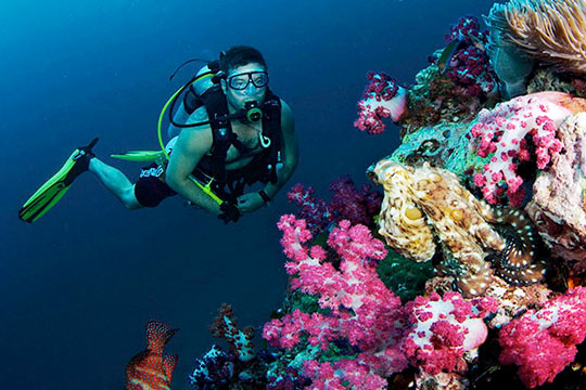 Scuba Diving Package with 5 People Tour