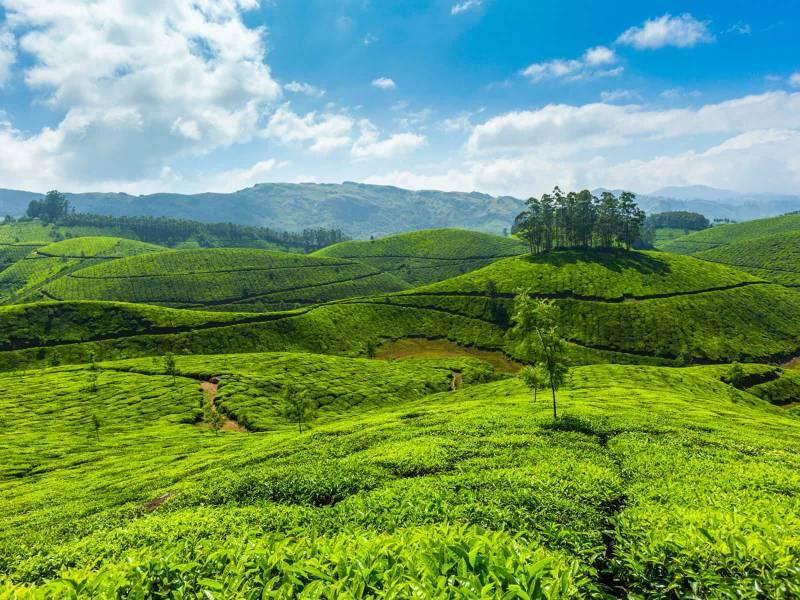 6 Days / 5 Nights Kerala Tour