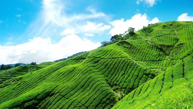 Affordable Experience in Kerala Fly-N-Stay Tour