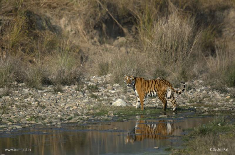 Nainital to Corbett Tour