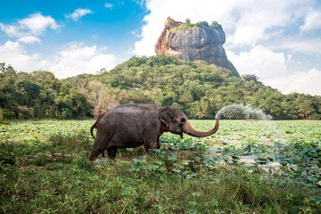 Sigiriya, Kandy and Colombo Tour