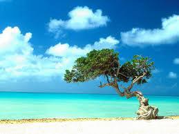 Andman Island Tour