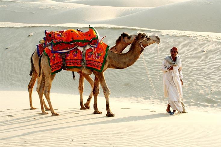 Heritage Camel Safari Tour