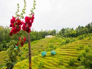 The Beautiful Hills of Nainital & Ranikhet