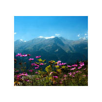 Independence Day Special - Manali Tour