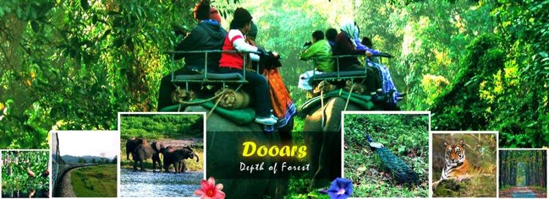 Dooars / Lataguri / Gorumara Package Tour