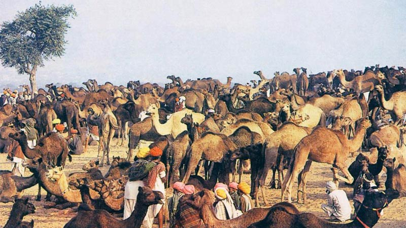 Classical Rajasthan Tour