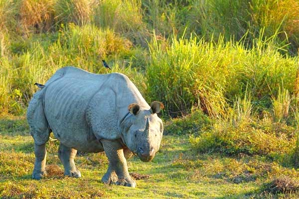 One Horned Rhino Tour