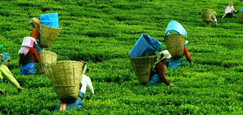 Tour Packages for Darjeeling + Gangtok