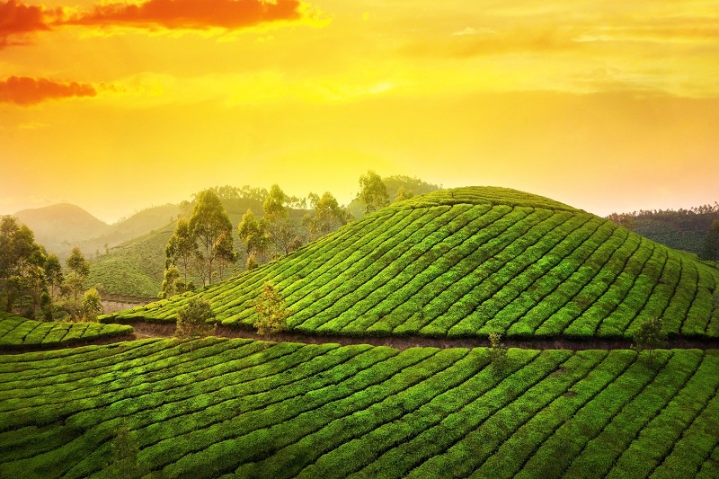 Authentic Kerala Tour
