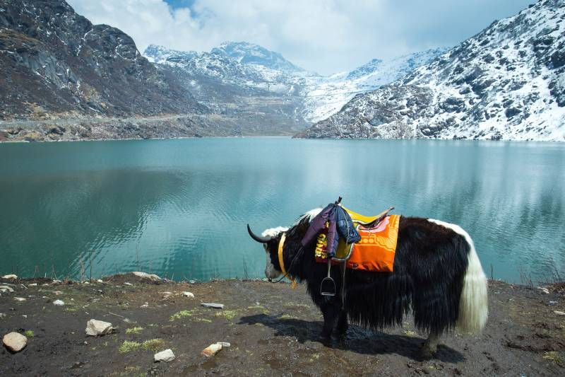 5 Nights 6 Days Sikkim Darjeeling Tour