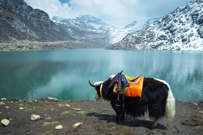 5 Nights 6 Days Sikkim Darjeeling Tour