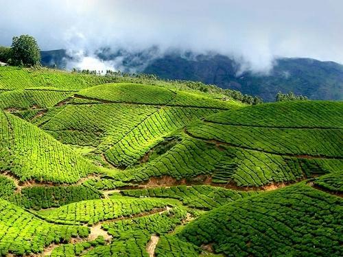 Graceful Kerala - Standard Tour