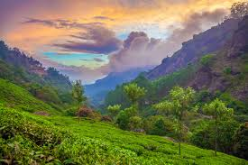 Munnar-Thekady 3 Nights 4 Days