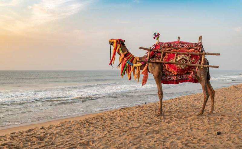 Puri BBSR Chilka Gopalpur 5 Days 4 Nights Tour