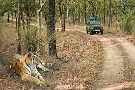 Exploring Pench Tour