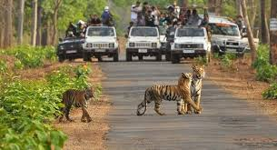 Ranthambore Photography Tour