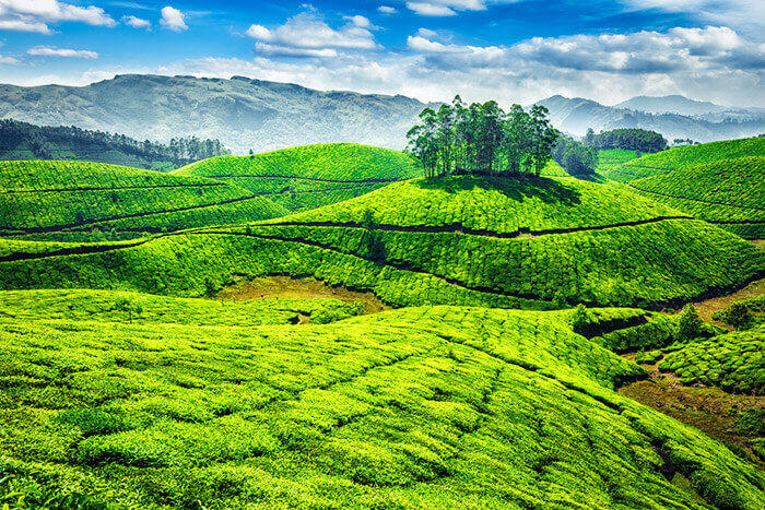 4 Night 5 Days kerala Family Tour